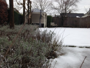 tuin winter